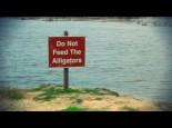 Alligator Feeding