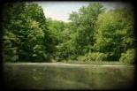 On Pollen Pond