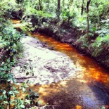 Tannins in the creek--natural beauty of indiegainesville